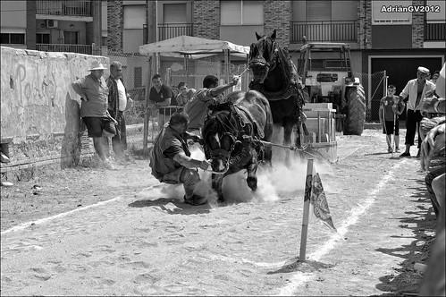 Tir i arrossegament 9 by ADRIANGV2009