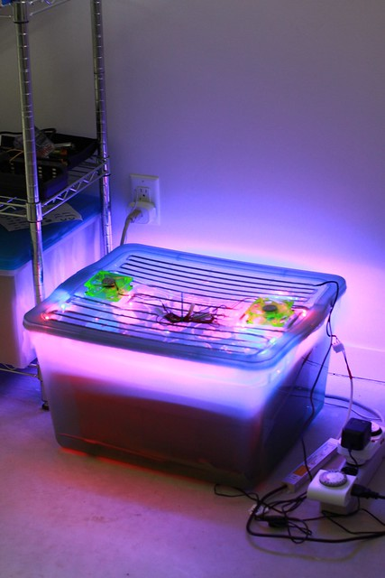 Automated Fogponic Grow Box