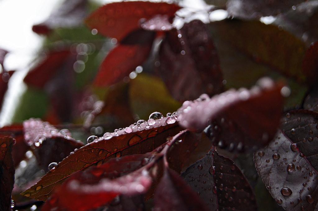 raindrops1