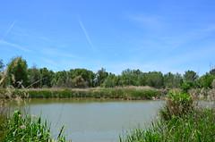 laguna de Miralcampo