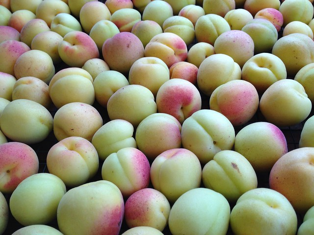 Header of apricots