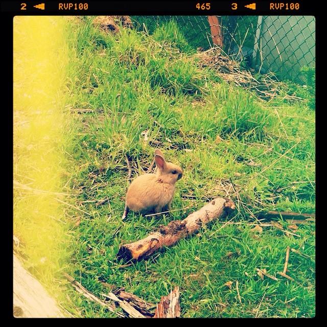 bunny wabbits