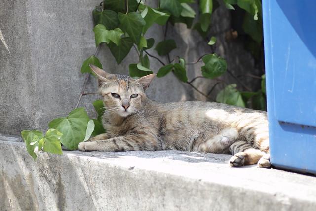 残された母猫