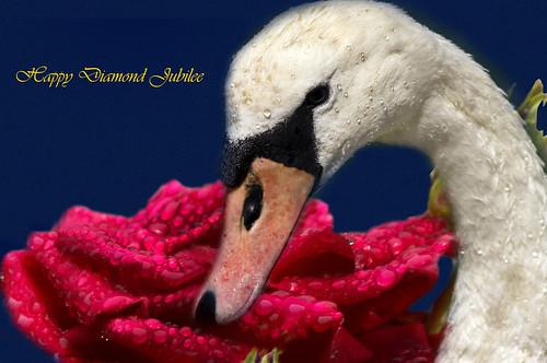 In celebration of the Diamond Jubilee of Her Majesty Queen Elizabeth II