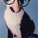 Small photo of Groucho Cat