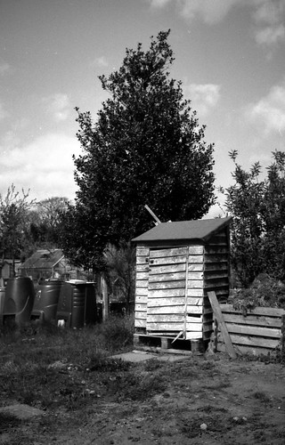 Old Shed, Allotment