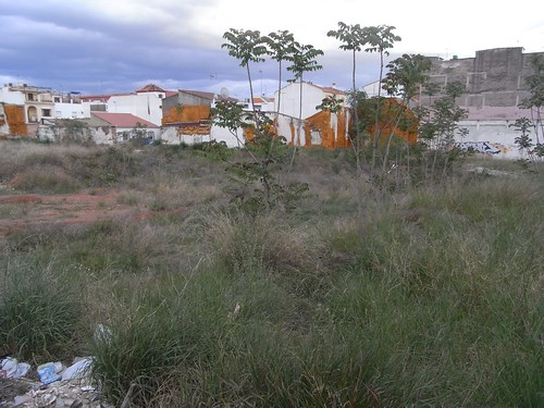 Solar abandonado avenida Almogavares biodiversidad