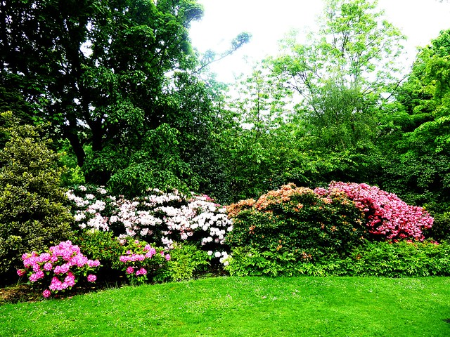 Rhododendrons, Princess St. Gardens