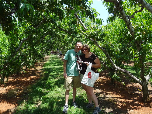 Peach Picking June 2012 (16)