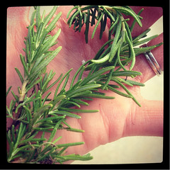 145- home grown rosemary