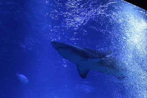 sumida_aquarium3