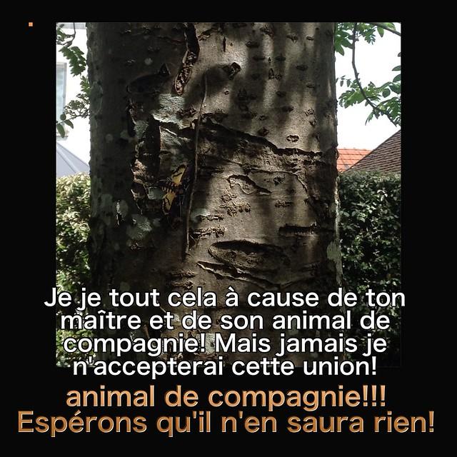 Y a pas que les mortemiamor dans la vie y a les bonsenfants  - Page 3 26518829860_7f10f1f6ac_z