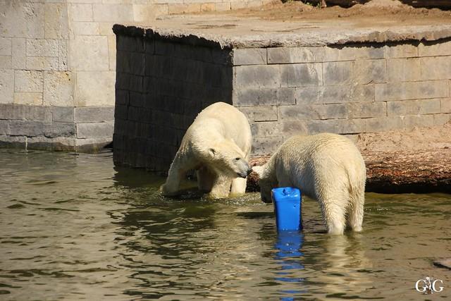 Besuch Zoo Rostock 07.05.201661