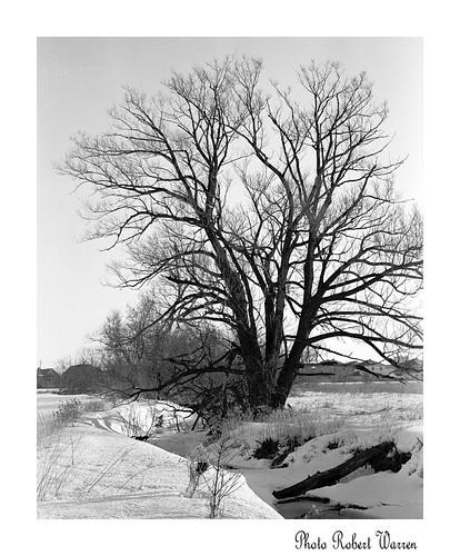 tree rollei creek landscape noiretblanc quebec kodak d retro monitor special 400 paysage arbre 76 six20 ruisseau vaudreuil