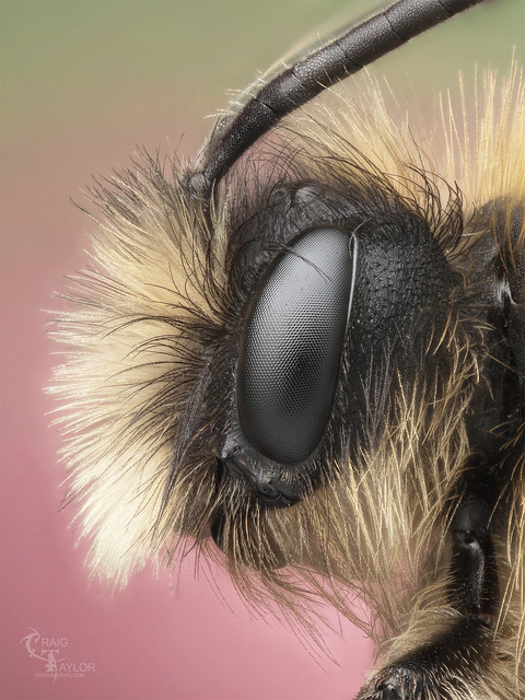 6878999598 7964345781 z 25 Insanely Detailed Macro Images Of Insects