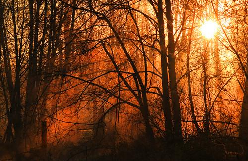 trees mist nature silhouette fog sunrise landscape washingtonstate t1i matthewreichel