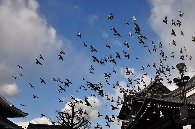 自由。京都