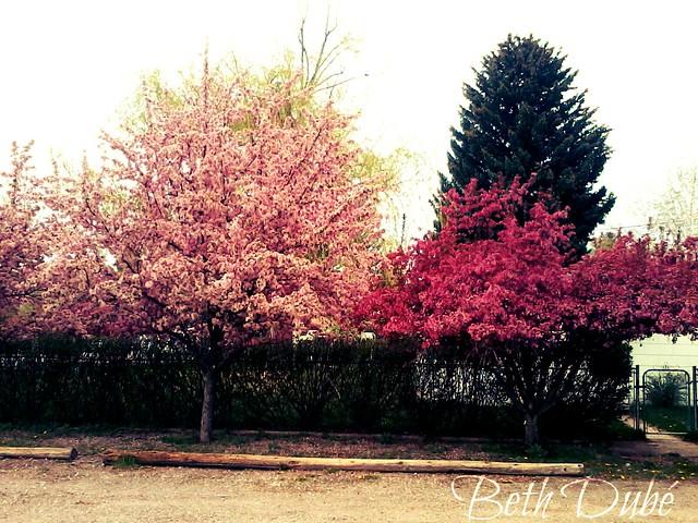 blooming trees wm