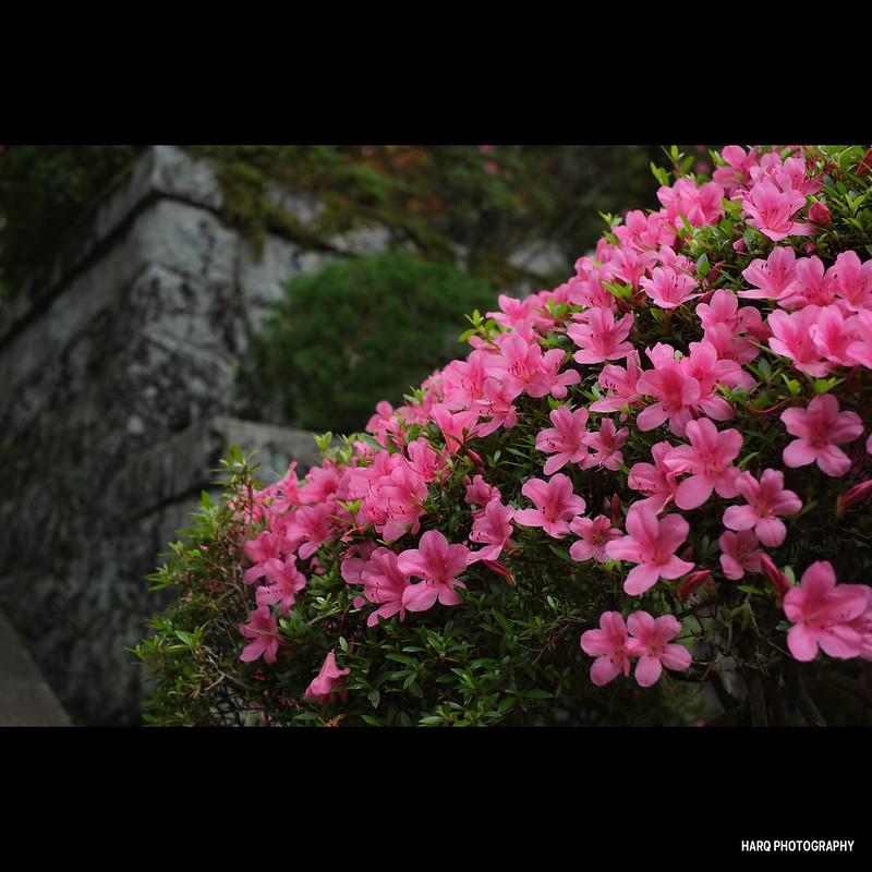 霊山寺(Reizanji Temple) *