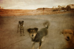 A New Pictorialism, 2009-2015
