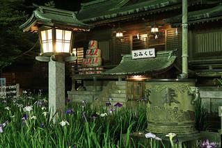 Iris Flower Festival 2012