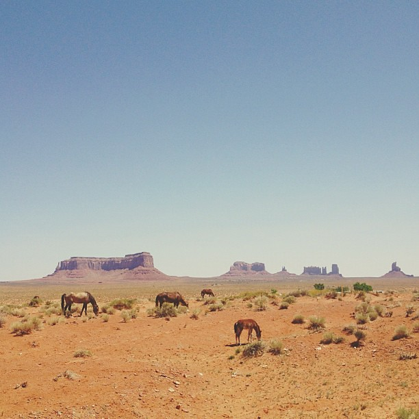 Grazers. Monument Valley, UT side #UntamedAmericas