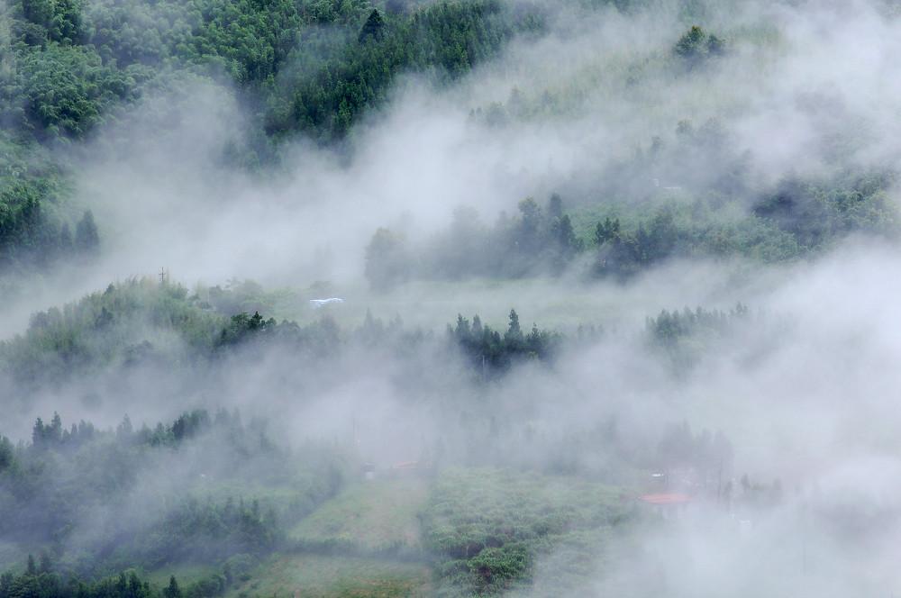 巨木群,與往拉拉山的路上-097