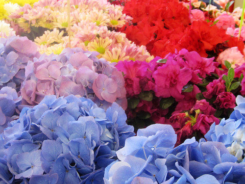 Colorful Floral Bouquets