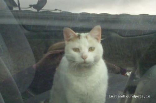 Tue, May 1st, 2012 Lost Female Cat - 1ml Off N17,  Three Quarters Of Ml From Corofin, Tuam, Galway