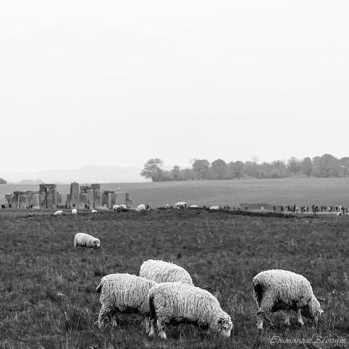 Sheeps of Stonehenge by Namu Bedroom