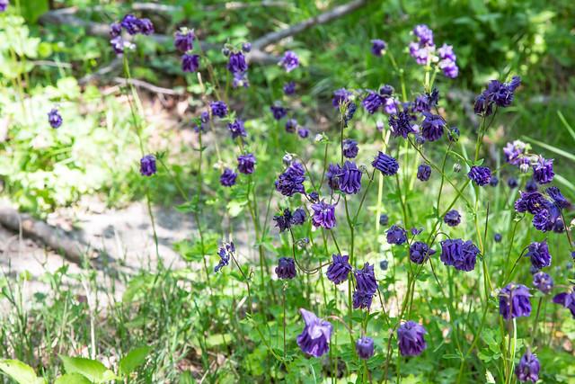 Minnewaska State Park - Wawarsing, NY - 2012, May - 19.jpg