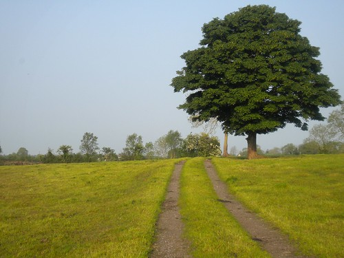 A right of way and a landmark tree