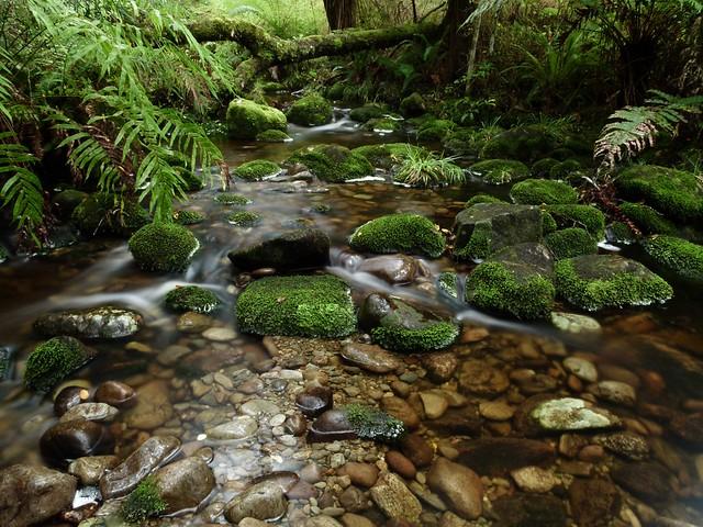 Forest Stream near Arnold River, West Coast NZ
