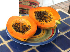 backyard papaya