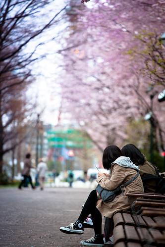 櫛次鱗比的櫻花樹這交通中心妝點了幾分姿色。像個羞澀的少女淡妝上容,美而不豔。