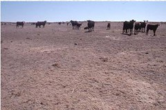 Maintenance livestock feeding on shortgrass prairie during extreme drought