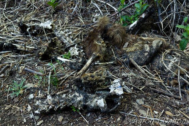 A Dead Bear