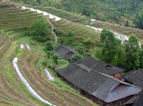 C-Guangxi-Dazhai-Descente (13)