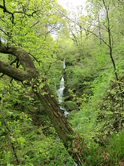 Stock Ghyll Force, Ambleside (1)