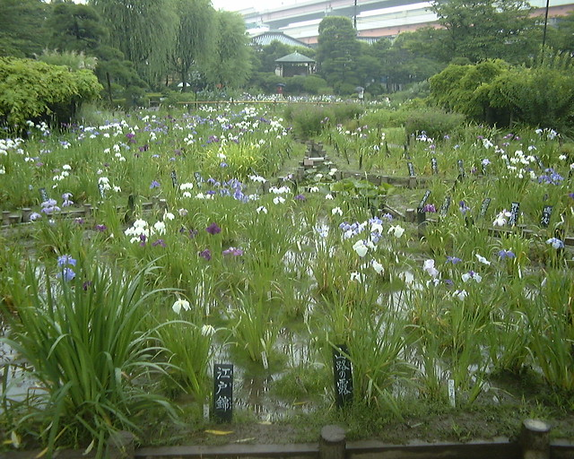 Horikiri Park, Tokyo