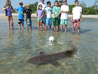 Group catches a nurse shark