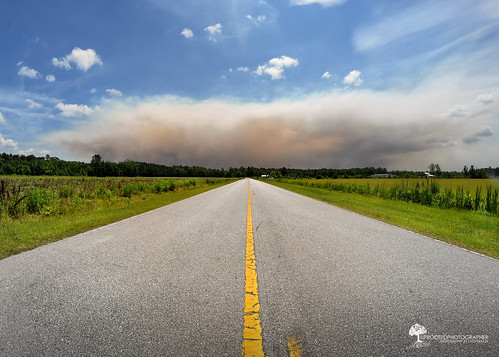 Forest Fire | Croatan National Forest, NC