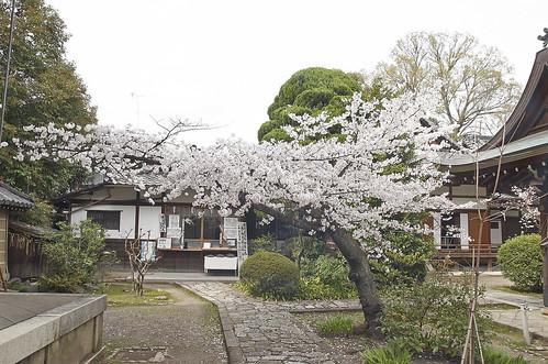【写真】2014 桜 : 上御霊神社/2019-08-08/IMGP5678