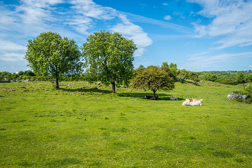 ireland landscape scenery fields