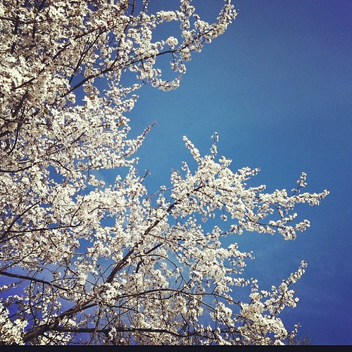 Plum blossoms out