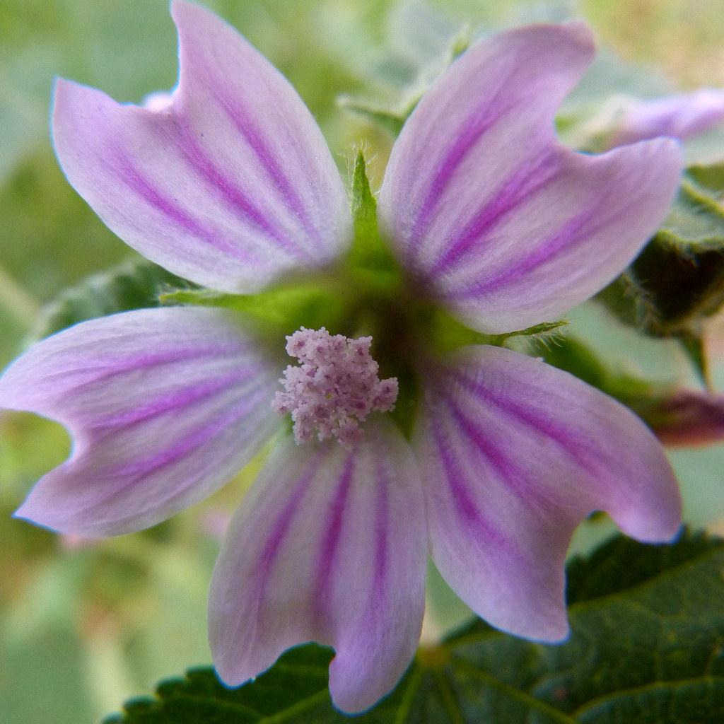 24-03-2012-spring-celebration-b2