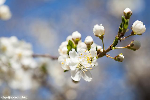 Весна в Тирасполе