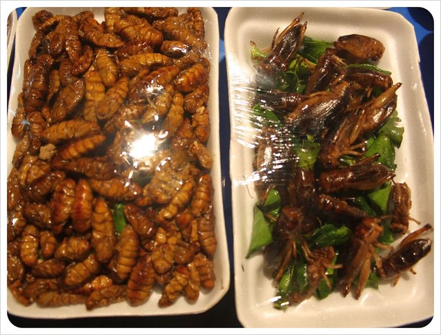 vientiane night market fried insects