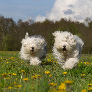 playing in the dandelions fields...
