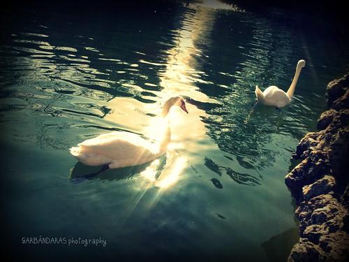 ...nunca fuimos cisnes... by Garbándaras